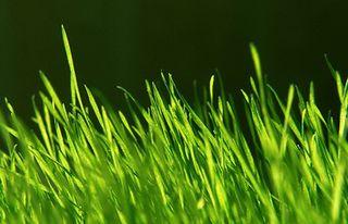 Scent-marketing-fresh-grass